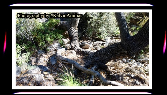 KALVIN Arailias #KalvinArailias #meditation #awareness #healer #healing #health #hiking #backpacking #camping #explore #chakra #nutritionist #sport #trainer #sportstrainer #athlete #professional #pic #picture #energy #fitness #adventure #portrait #tree #sacred #secret #revive #sun #sungaze #arizona #photographer