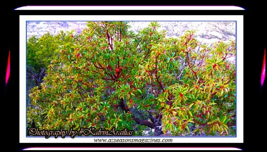 Kalvin Arailias #KalvinArailias #awareness #healer #healing #health #hiking #backpacking #camping #explore #photographer #pic #holistic #vegan #breatharian #sungaze #energyhealing #cleanse #detox #regenerate #energy #fitness #adventure #experience #tree #mountain #travel #apparel #lodge #hotel #cabin